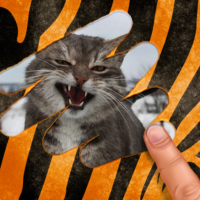 Scratch and guess the animal 9.4