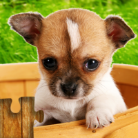 Dogs Jigsaw Puzzles Game – For Kids & Adults  28.2